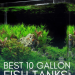 Best 10 Gallon Fish Tanks: Guide and Product Reviews - Pin
