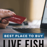 Best Place To Buy Live Fish Online - Pin