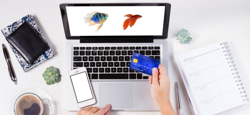 Man's hand holding a card facing a laptop with a picture of 2 fishes