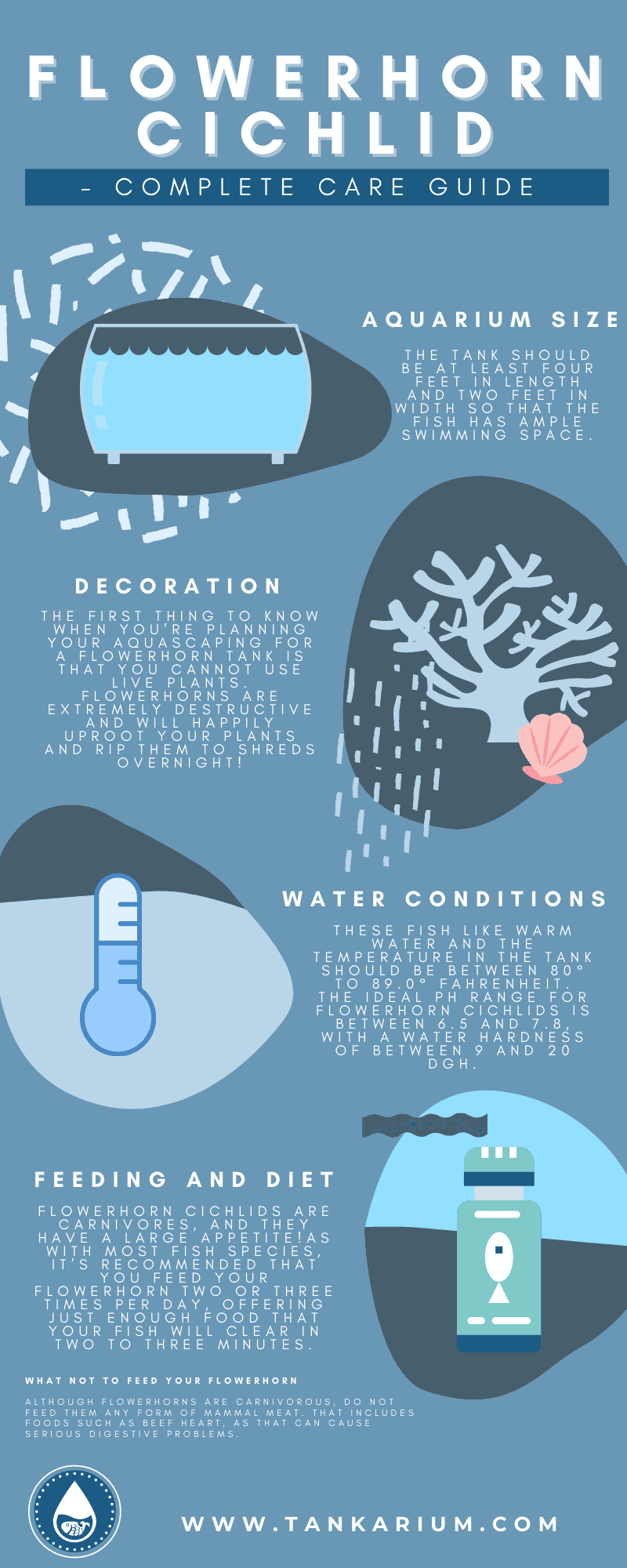 Flowerhorn Cichlid - Complete Care Guide-infographic