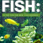 How to Care for Freshwater Fish: 15 Top Tips for New Fish Keepers!-pin