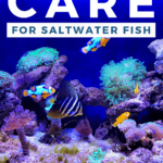 How to Care for Saltwater Fish - Pin