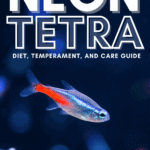 Neon Tetra - Diet, Temperament, And Care Guide -pin