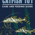 Pictus Catfish 101: Care and Feeding Guide - Pin