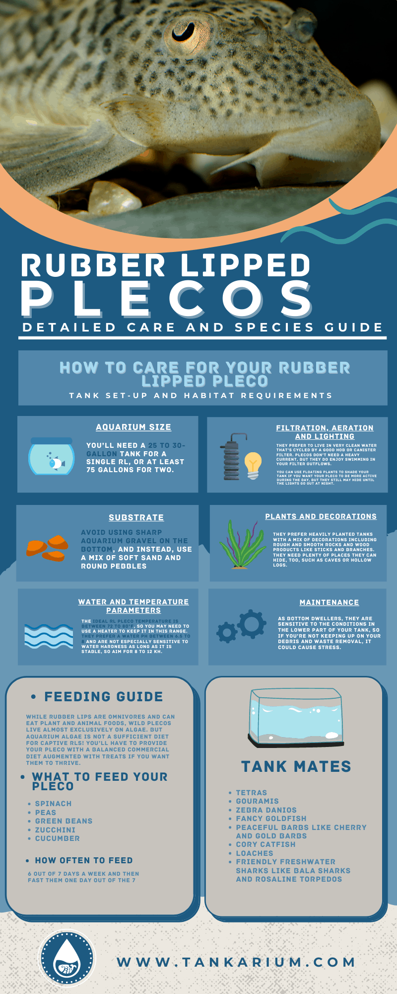 Rubber Lipped Plecos_ Detailed Care and Species Guide- infographic