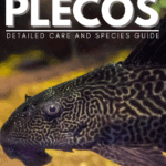 Rubber Lipped Plecos: Detailed Care and Species Guide - pin