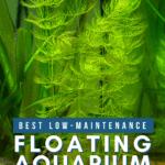 Best Low-Maintenance Floating Aquarium Plants For Your Tank - Pin