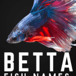 Betta Fish Names: Over 1,000 Cute, Clever and Humorous Options - pin