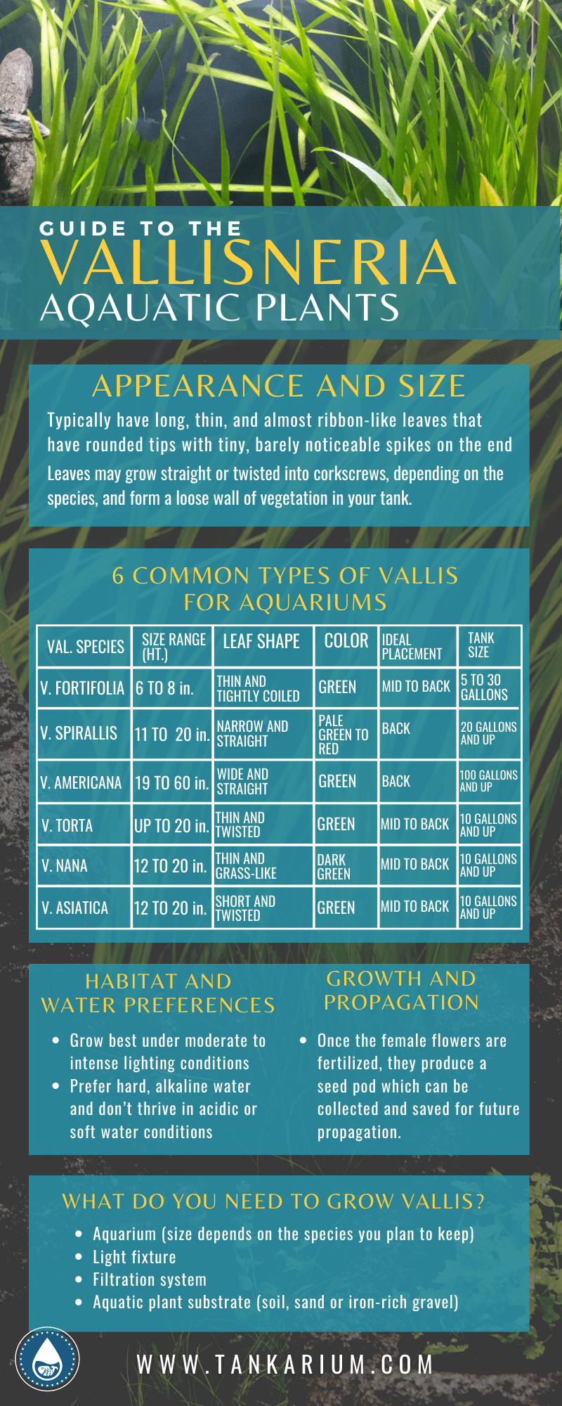 Guide to the Vallisneria Aquatic Plants - Inforgraphic