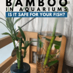 Lucky Bamboo in Aquariums: Is it Safe for Your Fish? - Pin