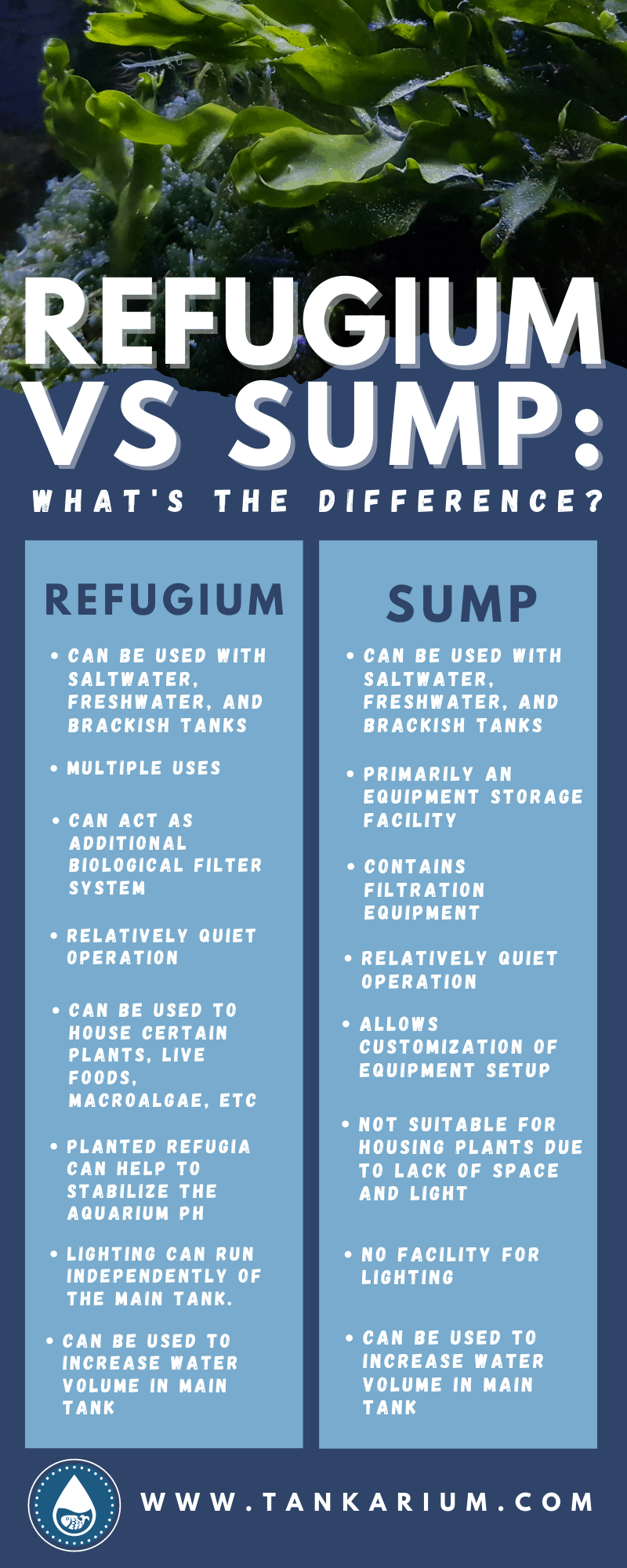 Refugium VS Sump: What's The Difference? - Infographic