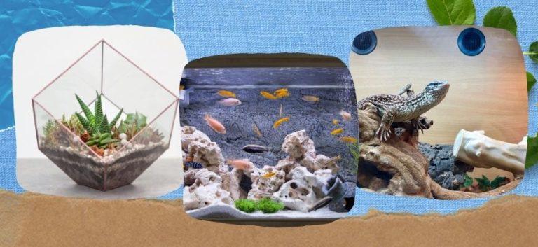 Terrarium, Aquarium and Vivarium in sand and blue background