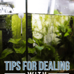Tips For Dealing With Cloudy Aquarium Water -pin
