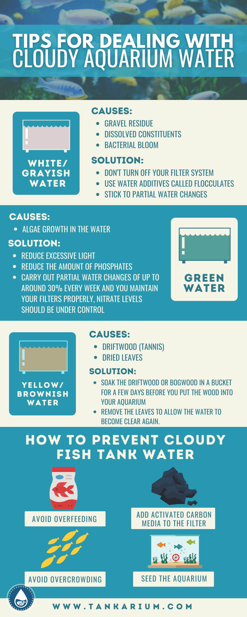 Tips For Dealing With Cloudy Aquarium Water-infographics