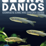 Zebra Danios: Complete Care and Species Guide - Pin
