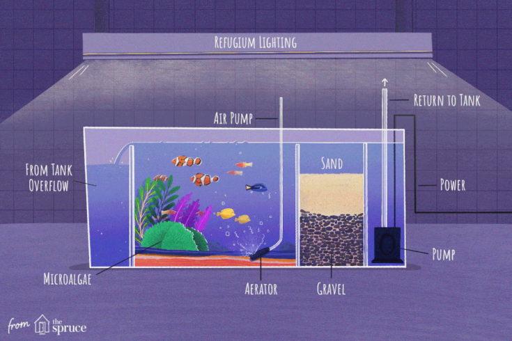 Saltwater aquarium refugium set up.