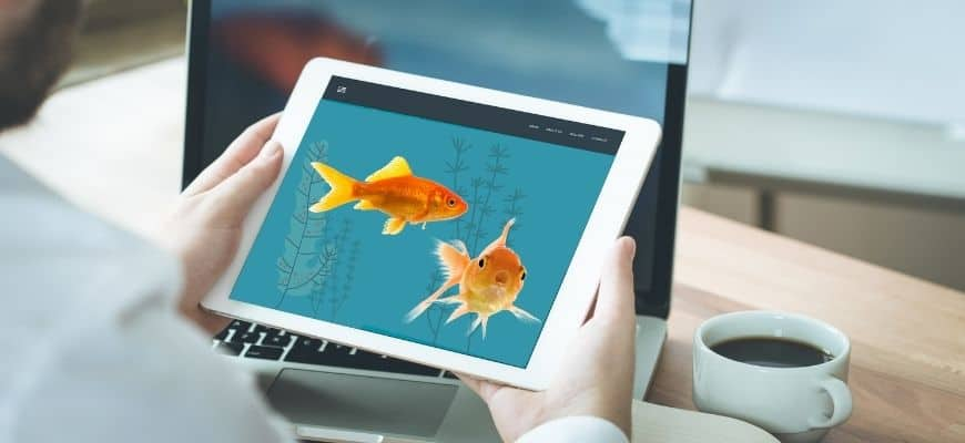 Man holding a tablet with a picture of goldfish