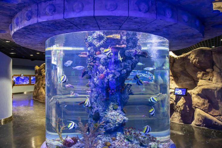The interior of the Oceanarium Crocus City, over 5000 species of fish and other animals from all over the world. Moscow, Russia