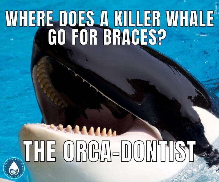 The orca-dontist memes