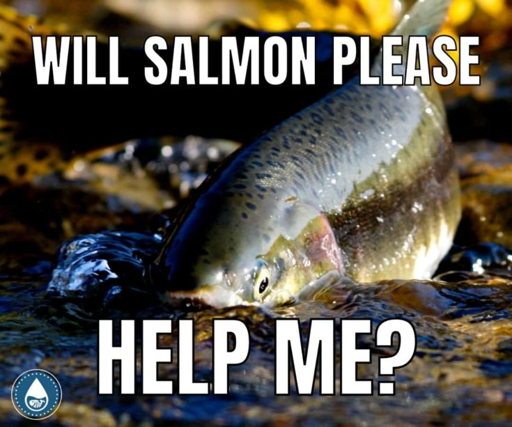15 Salmon Puns to Make You Pink With Envy memes