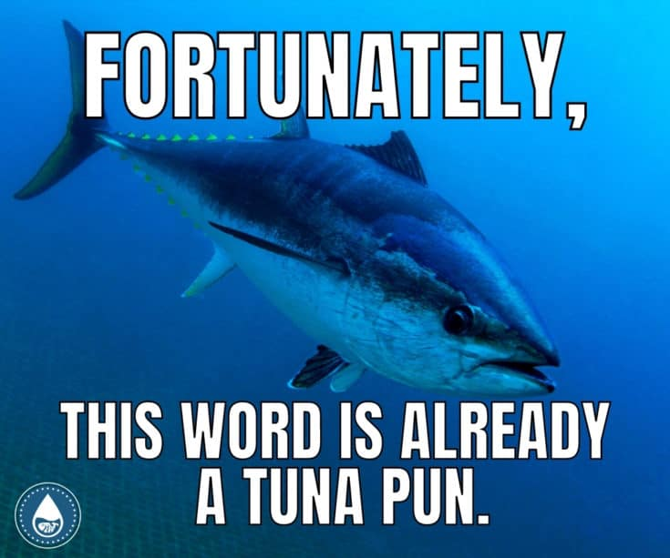 15 Puns For Every Even-Tuna-ality