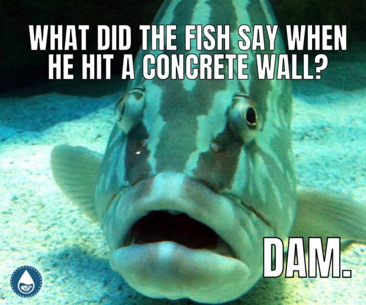 5 Corny Fish Jokes to Batter Your Friends With