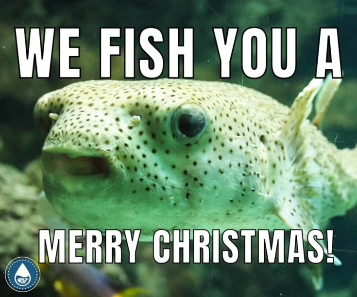 We fish you a merry christmas memes