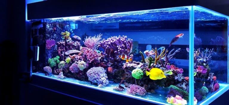 Focus shot of a big aquarium