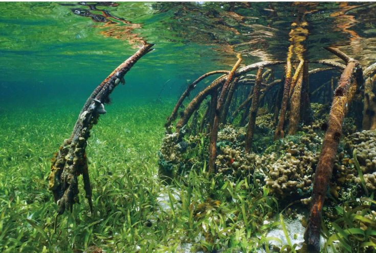 Top Fin® Underwater Wood & Zen Reversible Aquarium Background