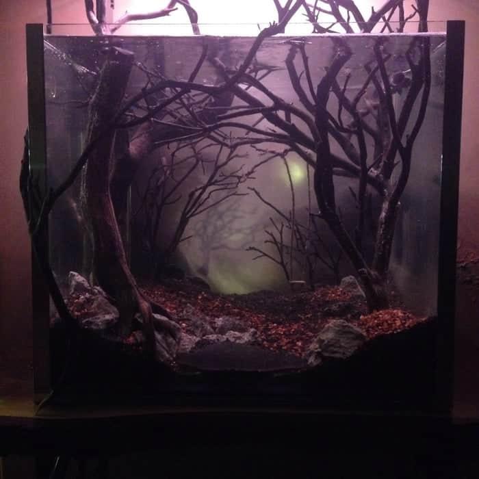 Dark and Eerie Fish Tank