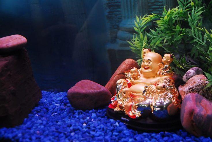 buddha-aquarium