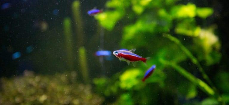 Small fish swimming in the aquarium and aquatic plants