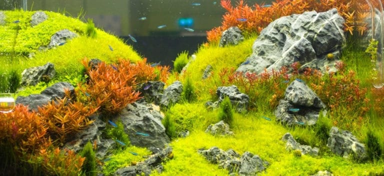 Fishes swimming in aquarium with plants