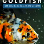 Shubunkin Goldfish - Tank Size, Care, Health And Lifespan - pin