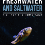 15 Exotic Freshwater and Saltwater Fish For The Home Tank - Pin