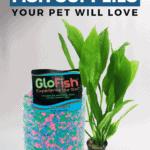 40 Popular Betta Fish Supplies Your Pet Will Love - Pin