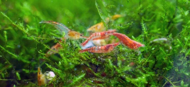 Shrimps on green plants