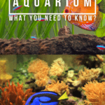 Saltwater Vs Freshwater Aquarium - What You Need To Know? - Pin