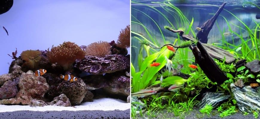 Saltwater aquarium and Freshwater Aquarium