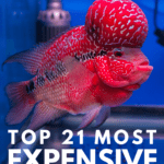 Top 21 Most Expensive Fish In The World - Pin