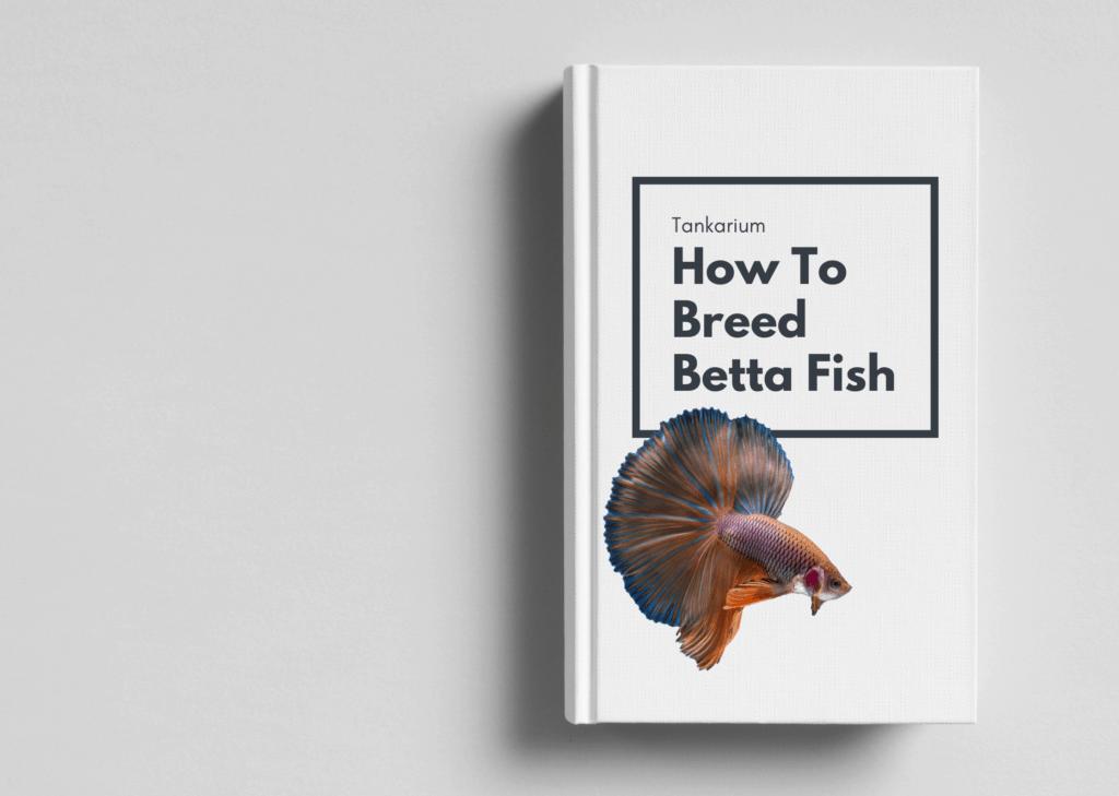 bonus ebook cover art - how to breed beta fish