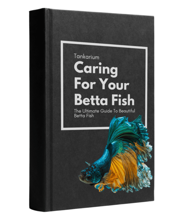 Caring for your betta fish ebook cover