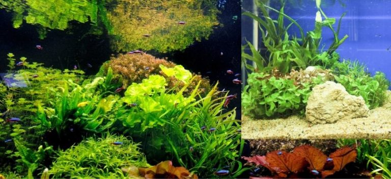 Fish tank with plants