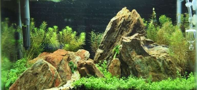 Fish tank with rocks decor and green plants