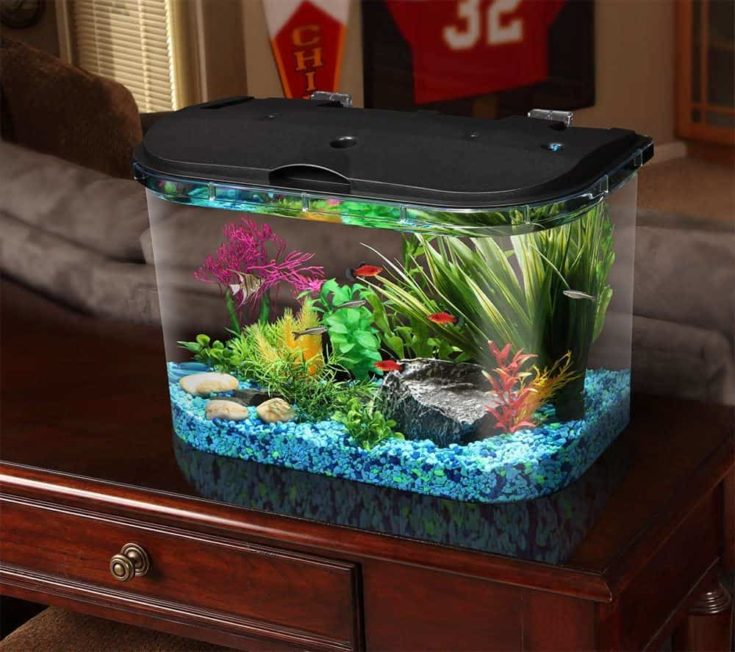 Koller PanaView 5-Gallon Aquarium Kit on the top of the table