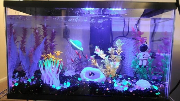 space-themed fish tank