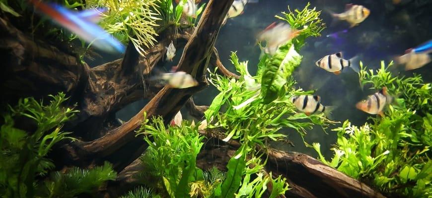 Focus shot of aquarium plants inside a tank.