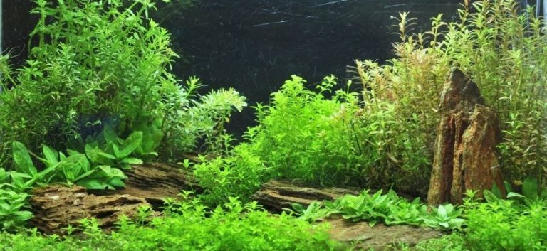 Aquarium decor with green plants and woods