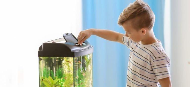 Boy feeding fish in the aquarium