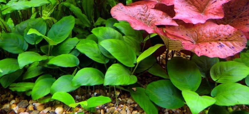Green plants in aquarium